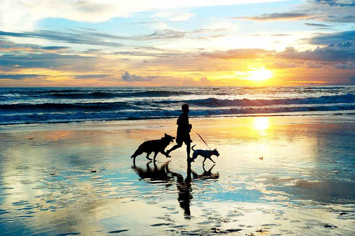 met hond op strand